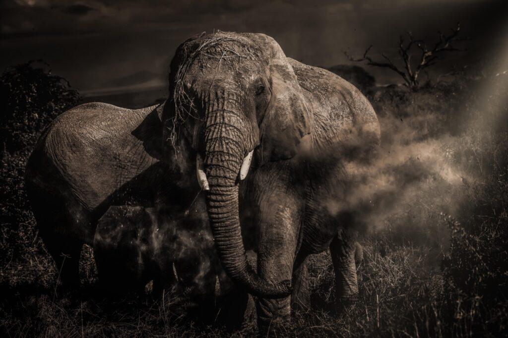 kristianschmidt elephant photo
